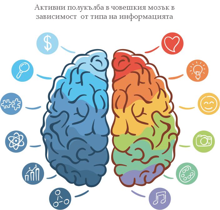 Полукълба на човешкия мозък