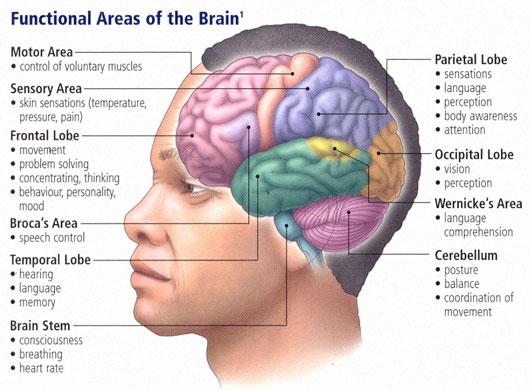 зони на мозъка